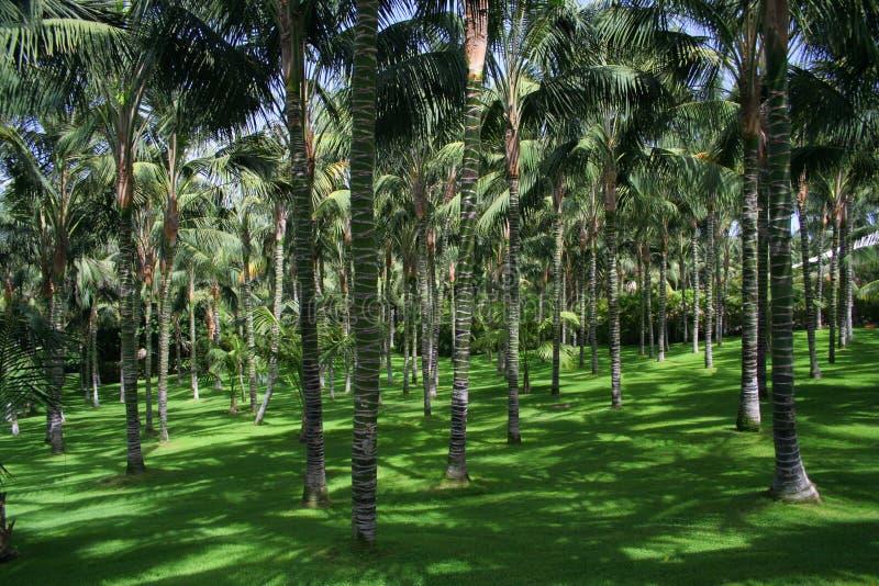 Tenerife Loro Parque - palms. Tenerife Loro Parque green palms stock photos