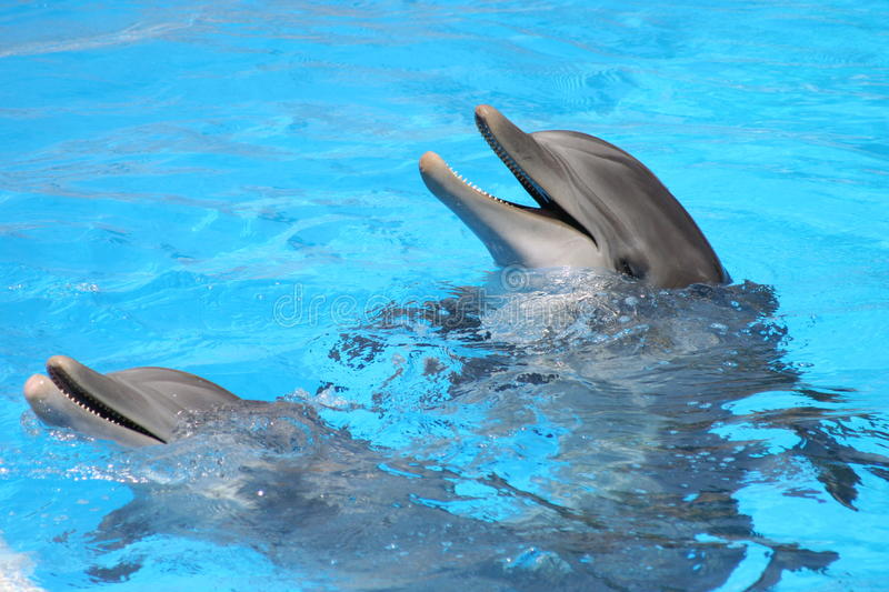 Tenerife Loro Parque. Smiling dolphins royalty free stock photography