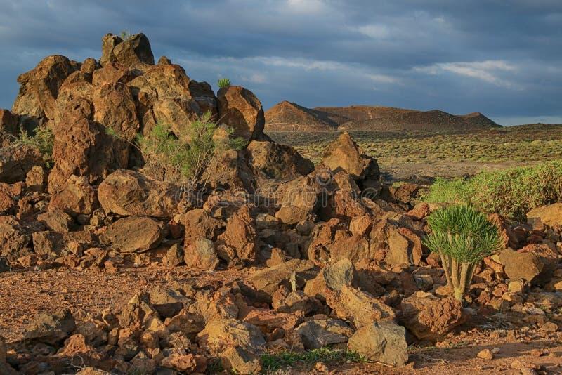 Tenerife, plats runt om Playa Colmenares, kakturs och landskap arkivbild