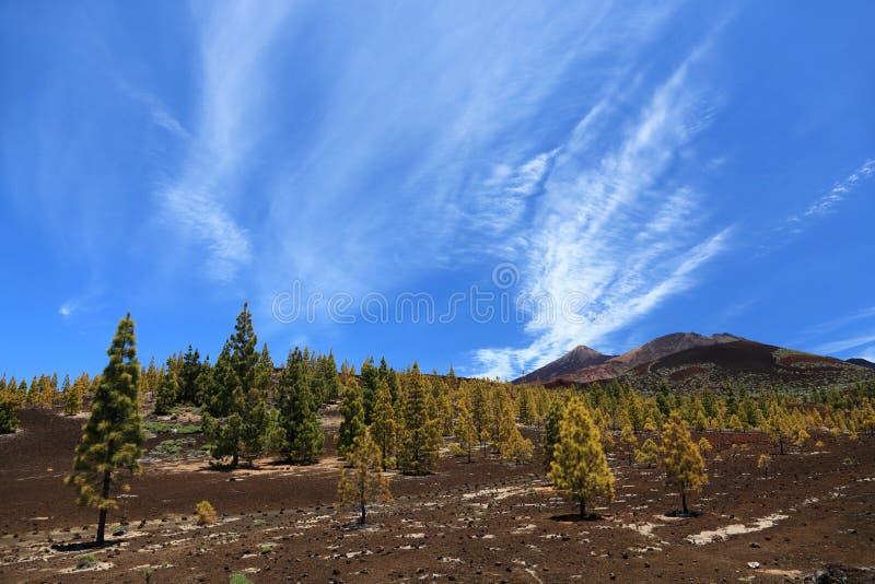 Tenerife, Teide Landschaft stockbild