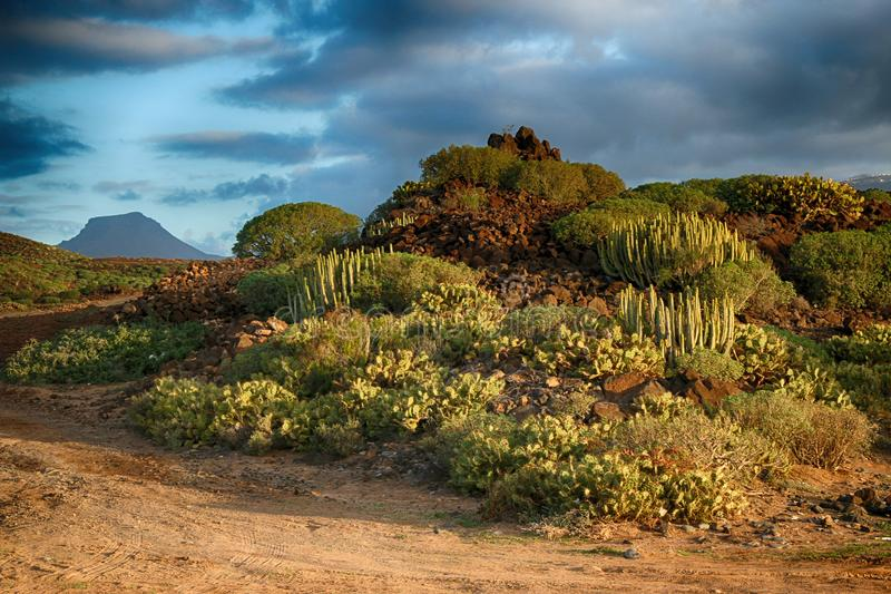 Teneriffa, Szene um Playa Colmenares, Kakteen und Landschaft stockfotografie