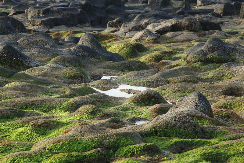 Teneriffa, Szene um Playa Colmenares, Kakteen und Landschaft lizenzfreie stockbilder