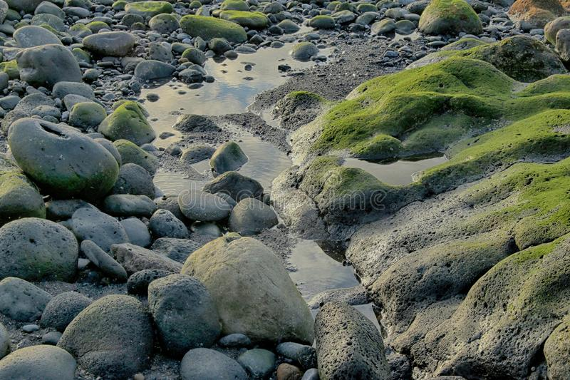 Teneriffa, Szene um Playa Colmenares, Landschaft stockfotos