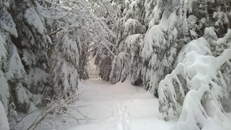 Teneriffe berg i vinter arkivbilder