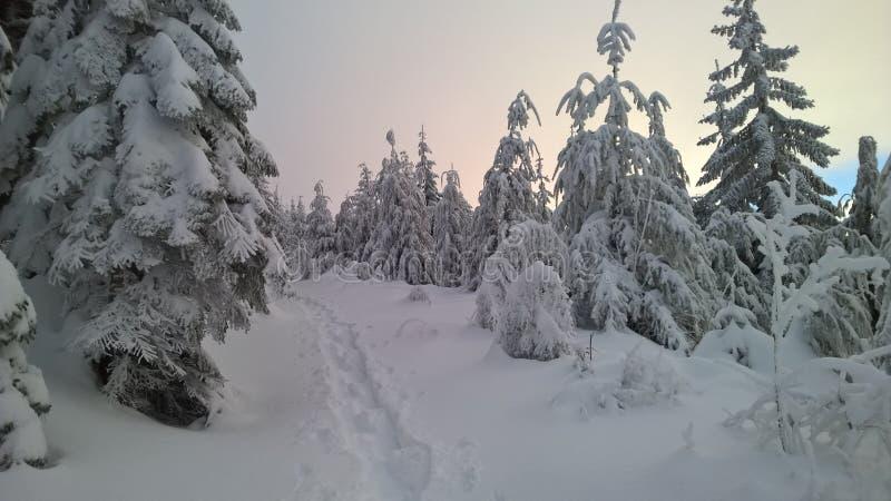Teneriffe Mountain in Winter royalty free stock photo