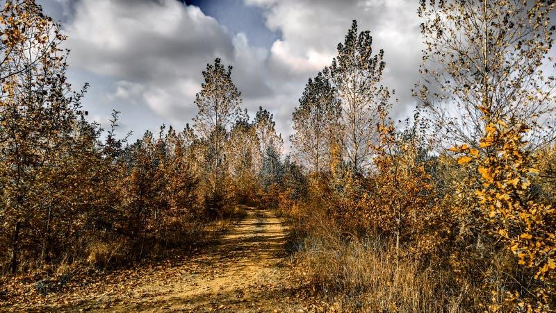 Tenga un paseo en bosque fotografía de archivo libre de regalías