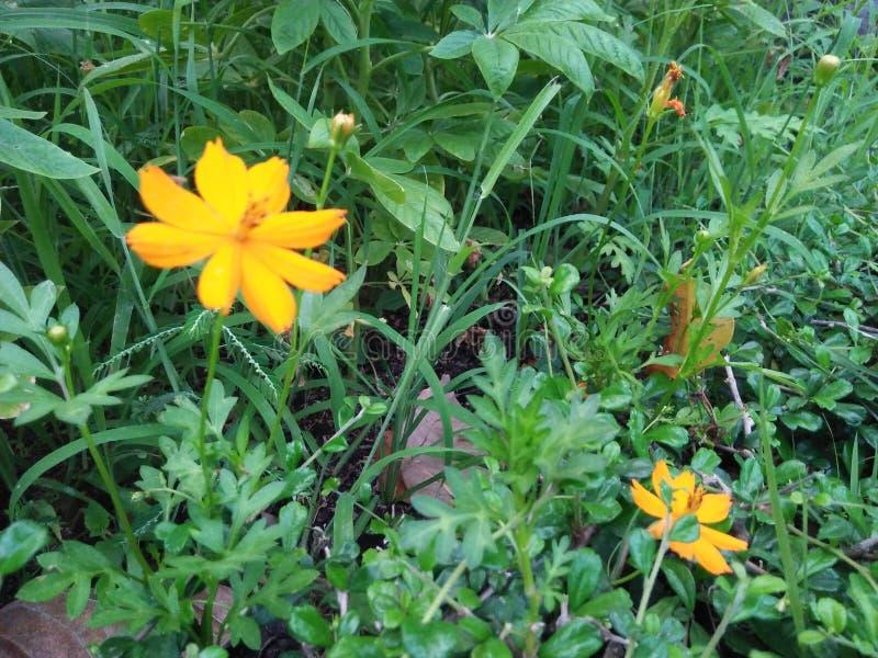 Tengere bloem in de tuin stock afbeelding