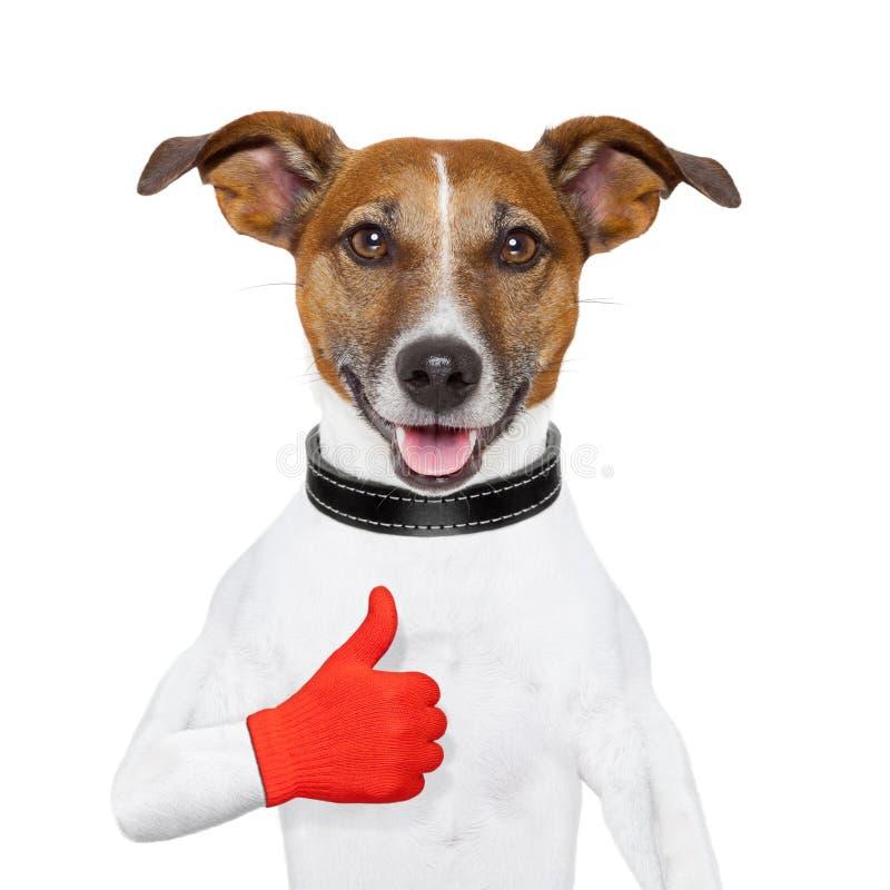 Tengo gusto del perro imagen de archivo libre de regalías