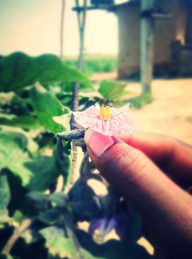 Tenir la fleur image stock