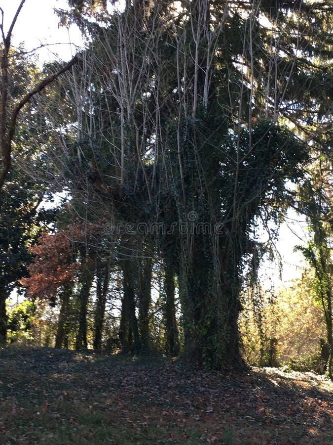 Tennessee Tree royaltyfria foton
