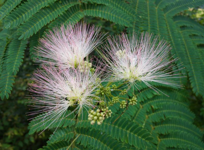 Tennessee Wildflowers immagine stock libera da diritti
