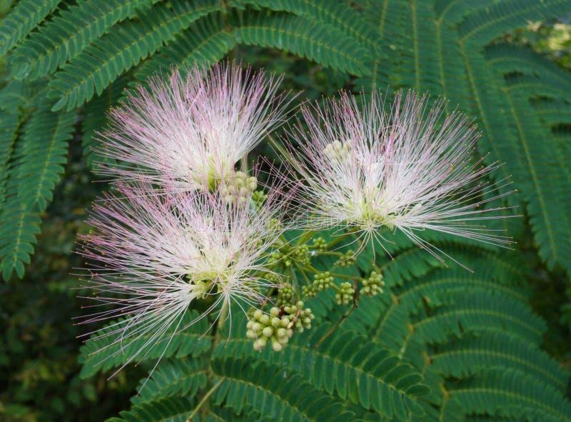Tennessee Wildflowers lizenzfreies stockbild