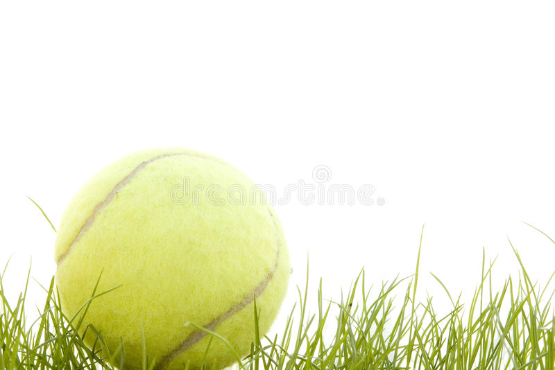 Tennis ball in the grass royalty free stock image