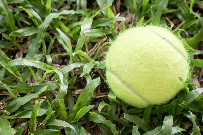 Tennis ball in grass background stock image