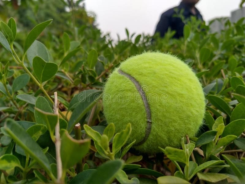 Tennis ball on grass. royalty free stock photos