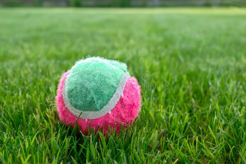 Tennis ball on the green lawn on a Sunny day.  royalty free stock images