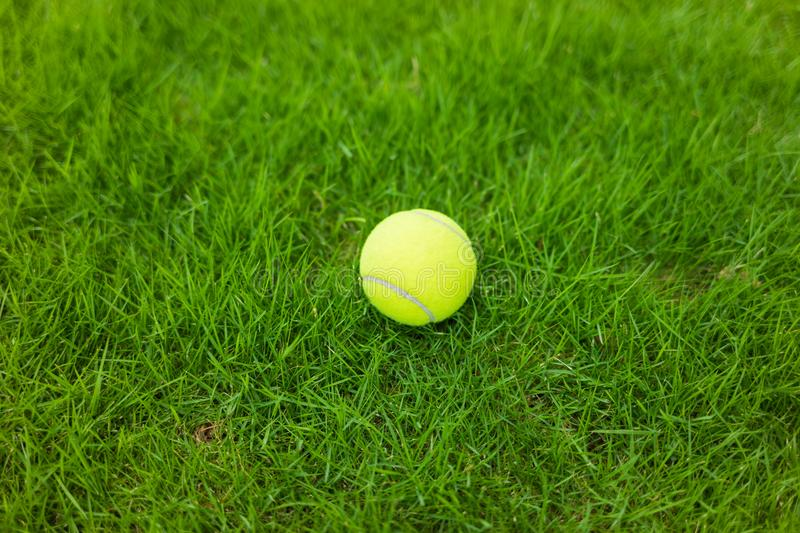 Tennis ball on green leaf background stock images