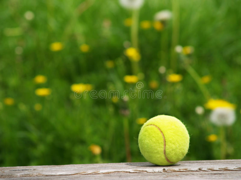 Tennis ball and meadow (47). Tennis ball and in background a green flower meadow stock photo