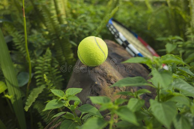 Tennis ball on top of a rock. Concept of green and healthy royalty free stock photo