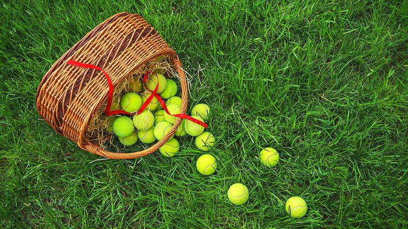Tennis balls in a basket on green grass. royalty free stock photo