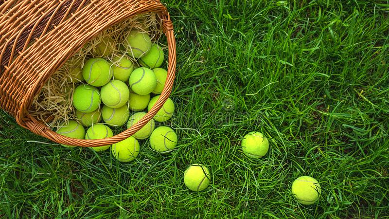 Tennis balls in a basket on green grass. stock images