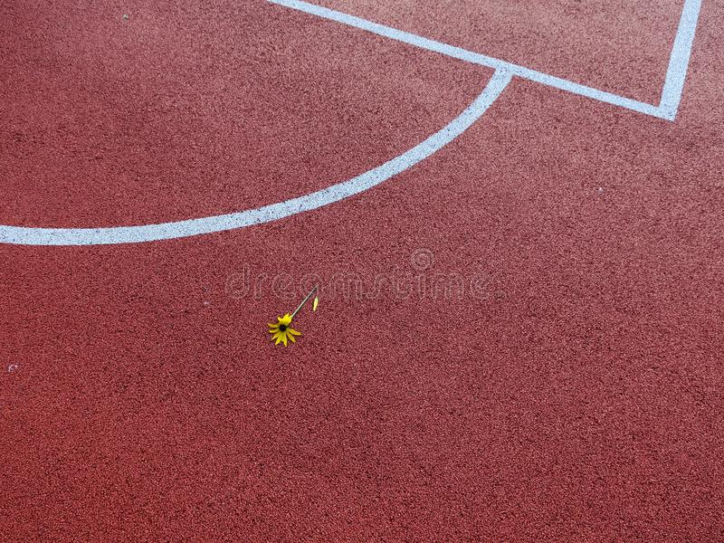 Tennis court yard with flower. Tennis court yard with white lines with yellow flower and lost petal stock image