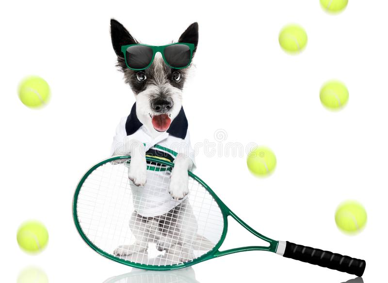 Tennis dog  with owner and ball stock photography