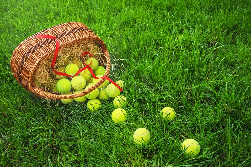 Tennis Easter with tennis balls in a basket on green grass in the sunlight. stock photo