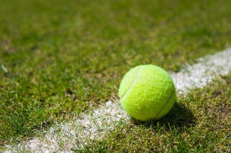 Tennisboll på en gräsdomstol royaltyfri bild