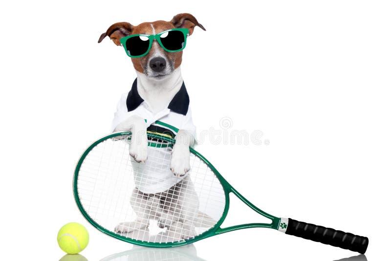 Tennishund stockbilder