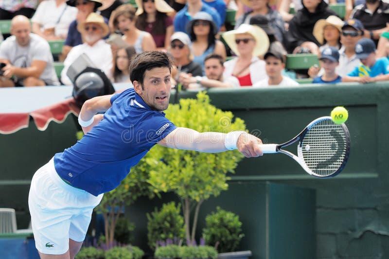 Tennisspeler Novak Djokovic die voor het Australian Open bij de Klassieke de Tentoonstellingstoernooien van Kooyong voorbereiding stock foto's