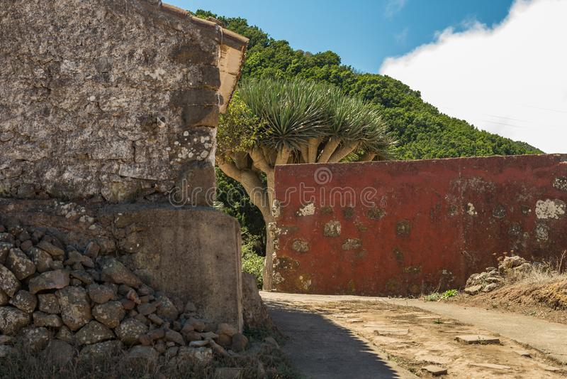 Teno Alto Mountains Village typique avec de vieilles Chambres Collines vertes couvertes de bruyère et de lauriers Cactus, agave b photos stock