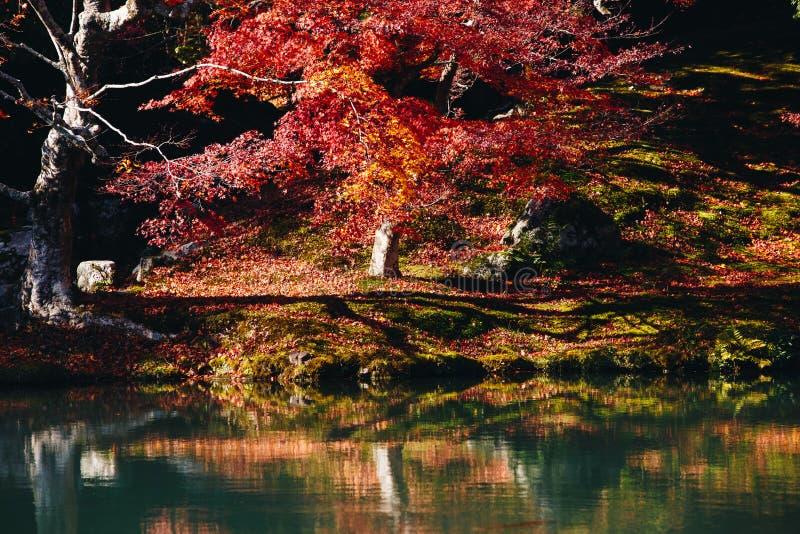 Tenryu-ji świątynia i Sogenchi ogród z jesienią przyprawiamy kolorowego fotografia stock