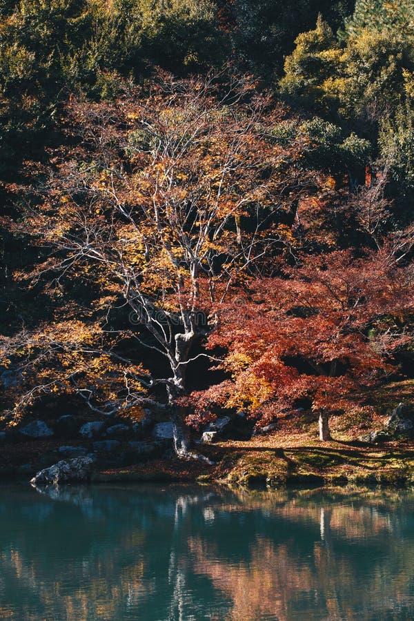 Tenryu-ji świątynia i Sogenchi ogród z jesienią przyprawiamy kolorowego obraz royalty free