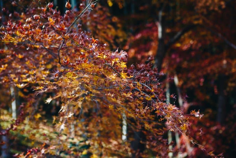 Tenryu-ji świątynia i Sogenchi ogród z jesienią przyprawiamy kolorowego zdjęcie royalty free