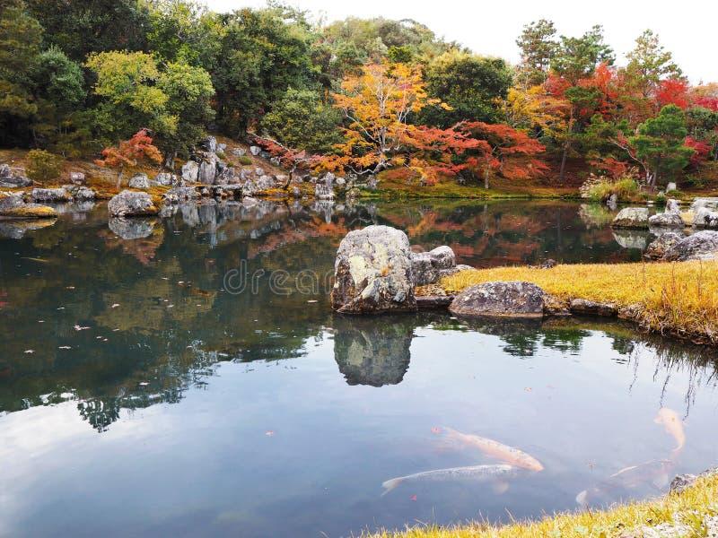 Tenryuji temple garden in autumn at Kyoto, Japan royalty free stock photography