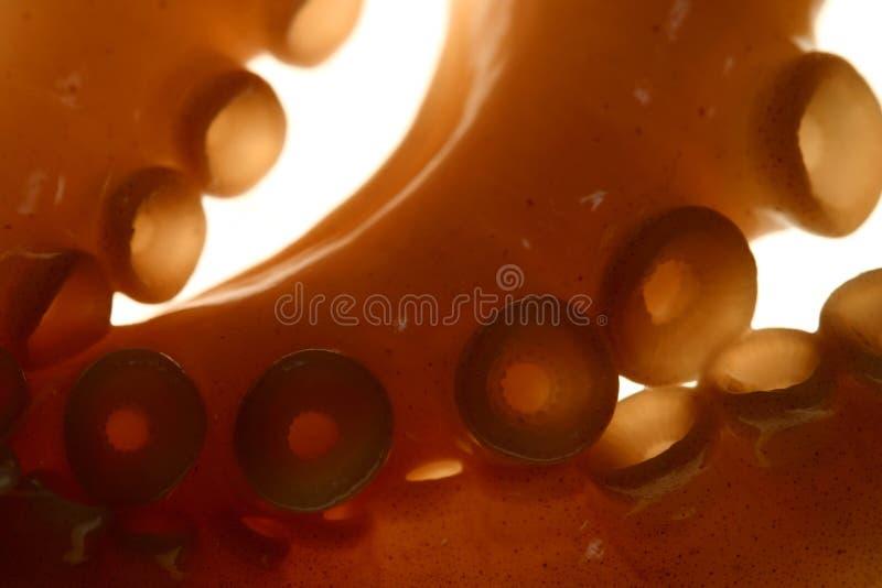 Tentáculos macro fotografia de stock