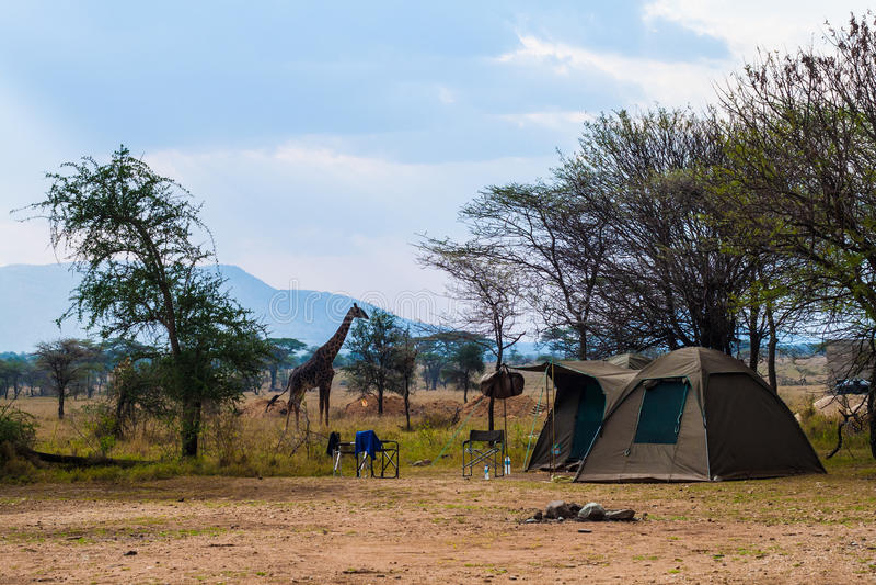 Tent camp in safari stock photo