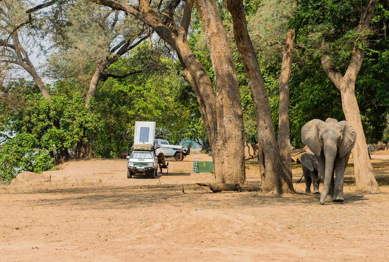 Tent camp in the Savannah at the lake of Zimbabwe, South Africa.  royalty free stock images