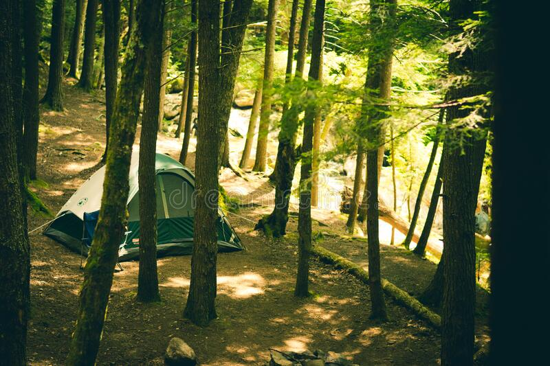 Tent In Forest Free Public Domain Cc0 Image
