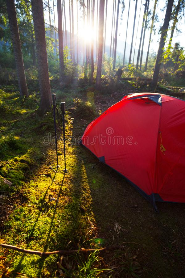 Tent in the forest against the background of the rising sun. Red tent and Trekking poles in the forest against the background of the rising sun royalty free stock photos