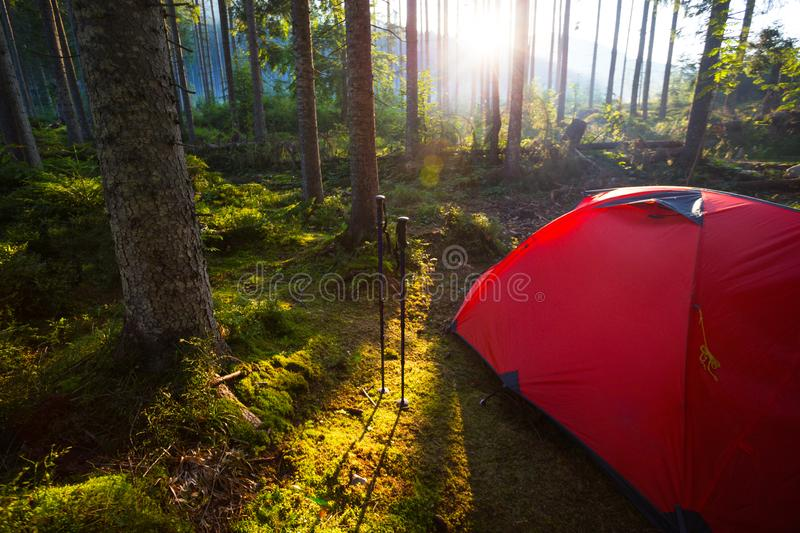 Tent in the forest against the background of the rising sun. Red tent and Trekking poles in the forest against the background of the rising sun royalty free stock photography