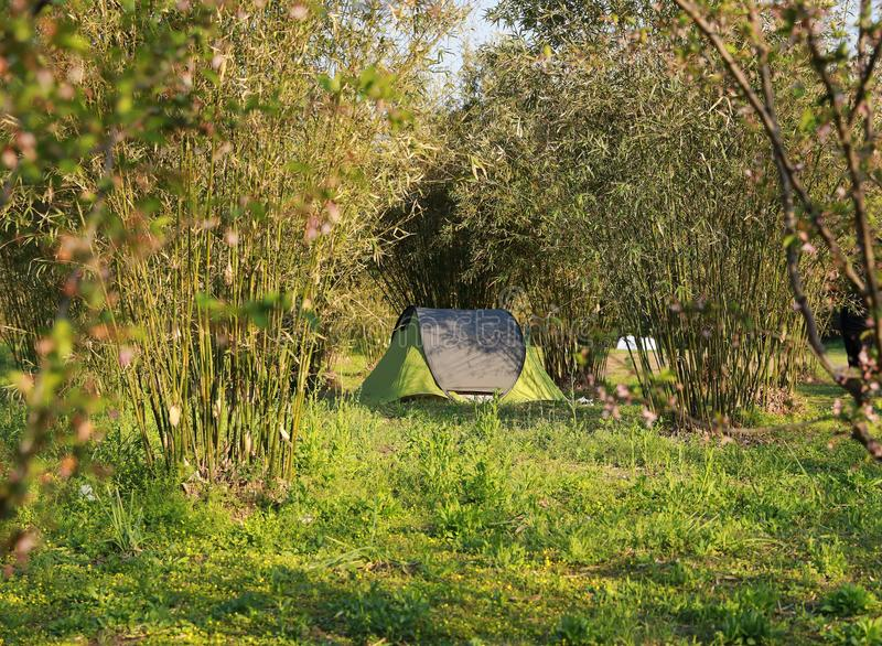 Tent in forests in summer sunny spring day family party picnic cozy easy balanced life stock photo