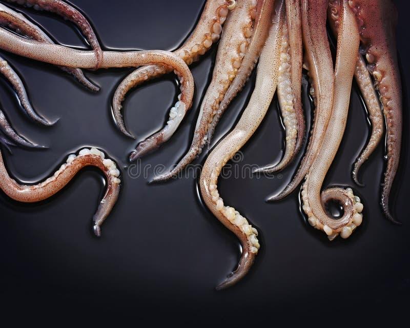 Tentacoli del calamaro fotografia stock libera da diritti