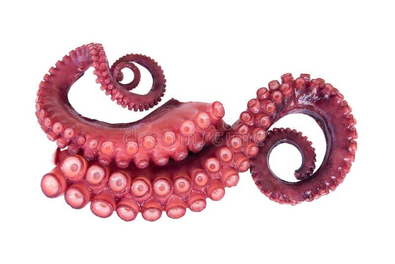 Tentakels van octopus stock afbeelding