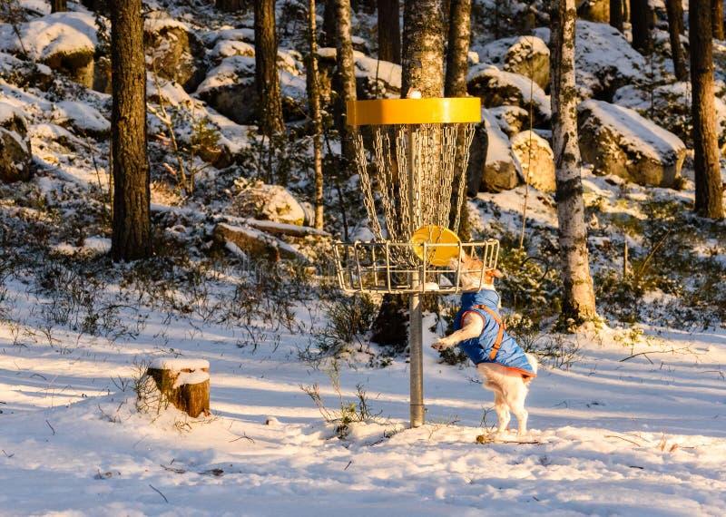 A tentativa do cão rouba o brinquedo da cesta do coletor do golfe do disco foto de stock royalty free