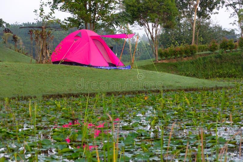 Tente rose campante sur le champ de pré avec l'étang de lotus sur le MOU photos libres de droits