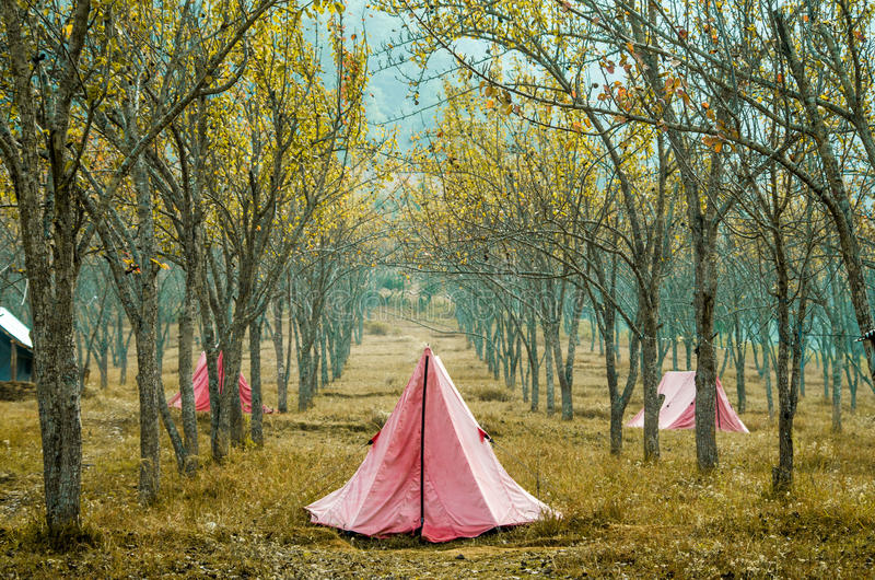 Tents. Tourists camping in tents in a forest stock photography