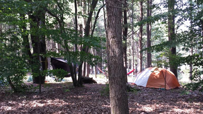 Tents in the woods. Campground during the Wheatland festival stock photography