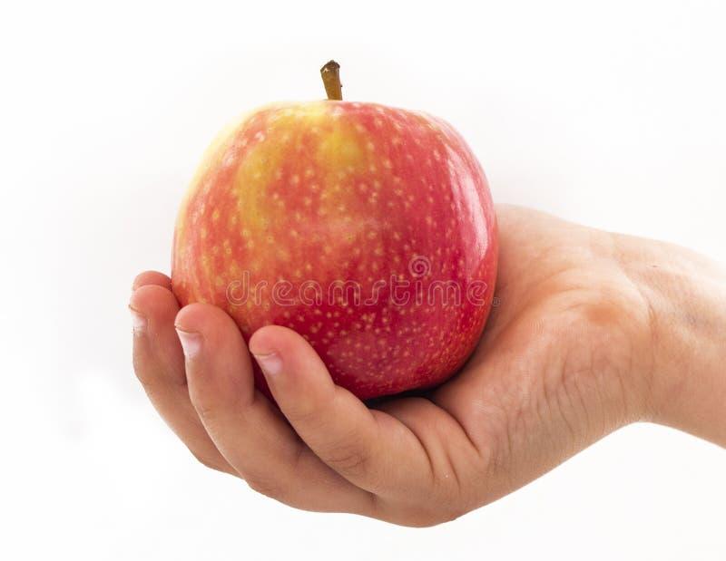 Tenuta capa una mela rossa e gialla immagine stock libera da diritti